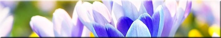 Kevade eripakkumised